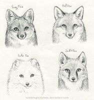 Foxes Preliminary Sketch by TumblingTortoises