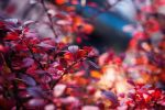 Autumn Time vol.2 by Justine1985