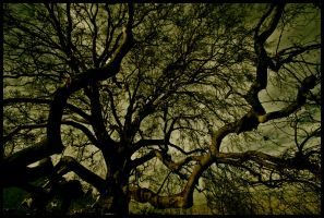 . : The Ent : . by kharax