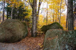 White Mountains  Fall Foliage  037 by FairieGoodMother