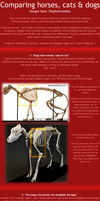 Cat vs Horse vs Dog anatomy by ShadowCatsKey