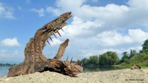 Cirrus clouds chasing driftwood wolf in hungary by tom-tom1969
