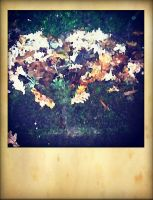 The heart of autumn.. by ansdesign