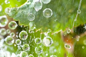 Drops on web by Quinnphotostock