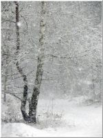 Blizzard continues... by Yancis