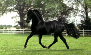 Free and Mighty by Jullelin