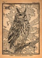 Eagle owl by LASILFIDEOSCURA