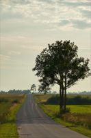 Country Roads by rici66