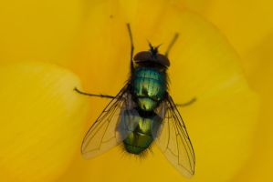 Fly - on Yellow by lueap
