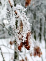 Frost 2 by Solan7