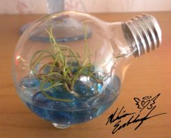 lightbulb terrarium by Adrastia217