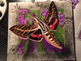 Hummingbird Moth (Ink and Water) by love4puppi
