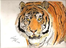 Tiger pencils by LorenzoMiola