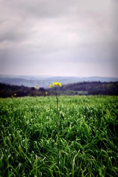 Green and yellow by tomsumartin