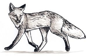 Fox Trot by silvercrossfox