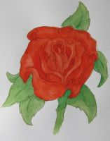 Red Graduation Rose by ThoughtMemory