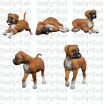 Boxer Puppies Stock 2 by Shoofly-Stock