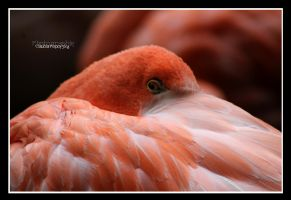 little Flamingo eye by declaudi