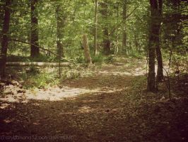New Camera Shots- Wooded Wonderland by hourglass-paperboats