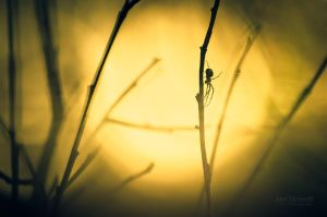 Silhouette Of A Spider by JoniNiemela