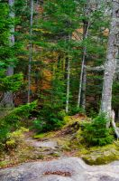 White Mountains  Fall Foliage  223 by FairieGoodMother