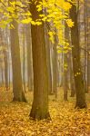 Misty Autumn... _2_ by my-shots