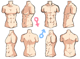 Torso Anatomy by ShadowCutie1