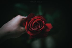 Rose red by forgotten-tale