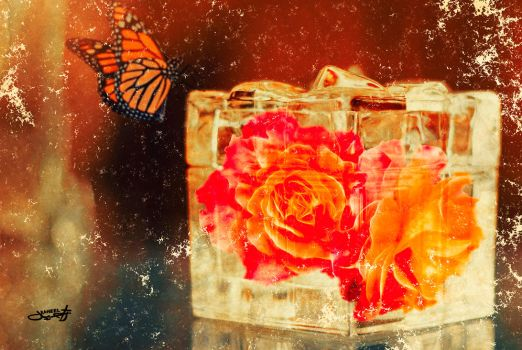 Roses in  a box 2 by raheel963