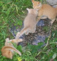 Kittenses 04 by Empy-Stock