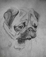 Mops by thenSir