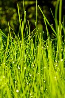 Green Grass 2 by b-a88