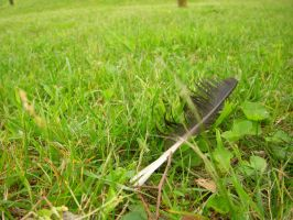 Feather in the Grass by Apollos-Foxhunt