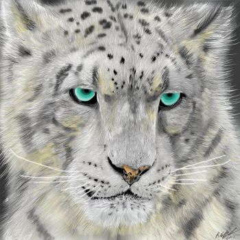 Snow Leopard by Cifercrossing