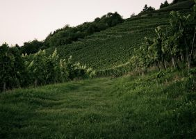 Wine Way by mikekaestner