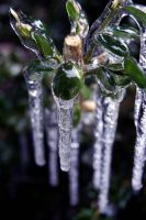 Icy Green by Nashmetro