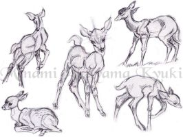 Animal Studies . Faun by Sorren-Chan