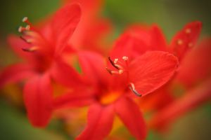 Very Red by Woz1