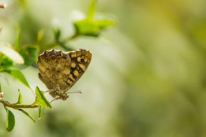 Butterfly by Bobbykim666