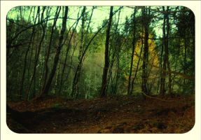 Birnam Woods In November by tamaskatai