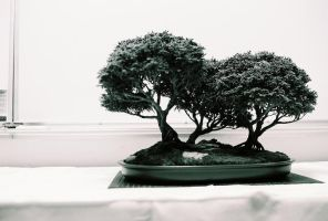 Bonsai by snapcrackleBANG