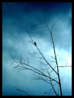 Gustave The Bird I by AvrilDC