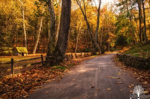 Life's Winding Road by JustinDeRosa
