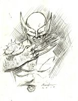 Wolverine Sketch by GreenMind-Dead