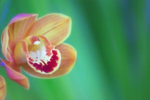 Orchid by Tamamantix