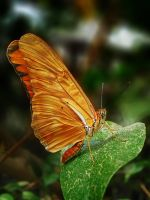 Butterfly I by fumar-porros