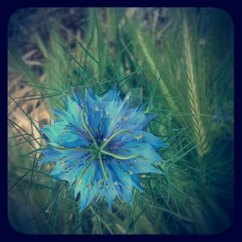 BlueFlower by elysa88