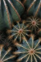 Cactus I by not-in-my-lifetime