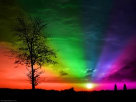 Exotic Rainbow by diggwallpapers