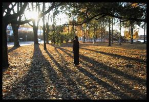 shadows of the fall by sininen